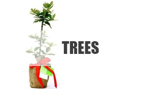 Trees as Gifts