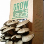 Fungi Futures Mushroom Grow Kit