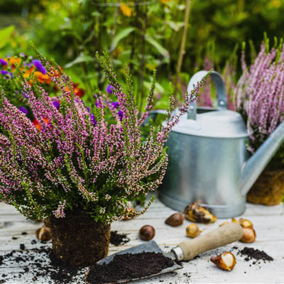The Autumn garden must do list