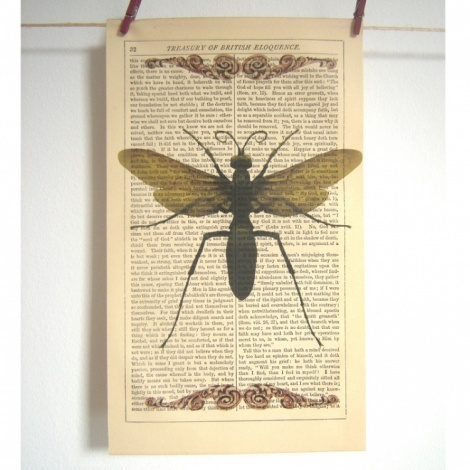 Roo Abrook Insect Vintage Print